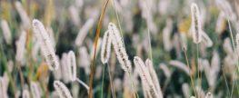Obudź się i zobacz przed oczami piękną łąkę – Łąka na fototapetach